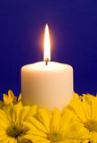 Candle Light and Yellow Daisies Stock Image