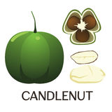 Candle nut Royalty Free Stock Images