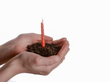 Candle seedling in handful soil. Cake candle in handful soil in hand on an isolated background Royalty Free Stock Images