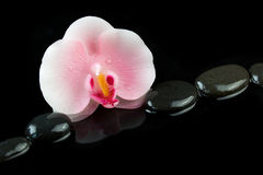 Candle in the shape of orchid flower and pebbles on black background Royalty Free Stock Photography