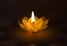 Candle wax on the lotus. Royalty Free Stock Image