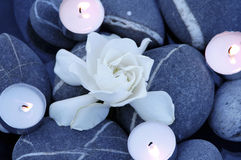 Candle and white flower Stock Image