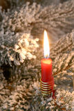 Candlelight on a christmas tree. A lit candlelight on a christmas tree Royalty Free Stock Photo
