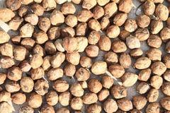 Candlenuts Fotografia Stock Libera da Diritti