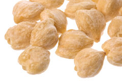 Candlenuts Isolated Stock Photography