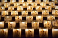 Candles burning in the famous Notre Dame de Paris cathedral in Paris Royalty Free Stock Photography