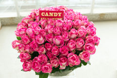 Candy Avalanche pink rose bouquet Royalty Free Stock Images