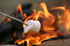 Candy camping. Marshmallow on a stick being roasted over a camping fire stock image