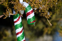 Candy Cane Christmas Ornament Decorating an Outdoor Tree Royalty Free Stock Photo