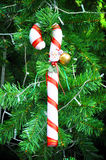Candy cane christmas ornament Stock Image