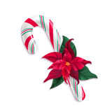 Candy cane and Christmas star plant on white background. Stock Image
