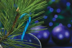 Candy Cane on Christmas Tree. A blue candy cane hangs on the branch of a green christmas tree Stock Image