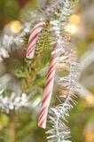 Candy cane in a christmas tree Stock Photo