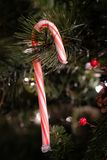 Candy Cane on Christmas Tree Decoration royalty free stock photos