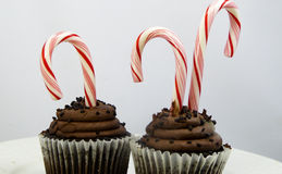 Chocolate Candy cane cupcakes Stock Photo