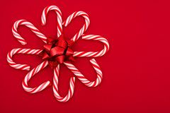 Candy Cane Flower Stock Photo