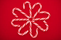 Candy Cane Flower Royalty Free Stock Photo