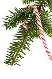 Candy Cane On Tree Royalty Free Stock Images