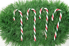 Candy cane and pine Royalty Free Stock Photo