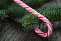 Candy cane on spruce twig Royalty Free Stock Photos