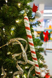 Candy cane on tree Royalty Free Stock Photography