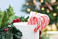 Candy Canes. Surrounded by holly branches with christmas tree and gifts in background Royalty Free Stock Photos