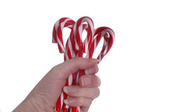Candy Canes. A hand holding a bunch of candy canes in front of a white background Stock Photography