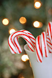 Candy canes. Mug filled with candy canes and christmas tree Stock Images