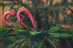 Candy Canes on a Christmas tree Stock Photography