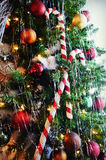 Candy Canes on Christmas Tree stock photography