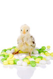 Candy chicken stock photo