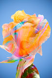 Candy Colored Rose Stock Photography