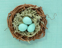 Easter eggs in mossy nest. Candy easter eggs in mossy nest on pale green background Stock Photo