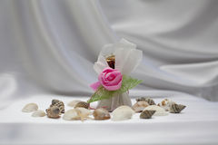 Candy gift with shell on silk background Royalty Free Stock Photos
