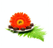 Candy on plate and flower Stock Images