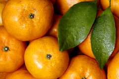 Candy tangerine of China. Chinese tangerine ,the scientific name is little leaf tangerine Stock Images