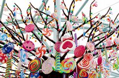 Candy tree. A tree filled with candies hanging downs stock photography