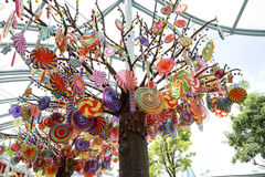 Candy Tree Stock Image