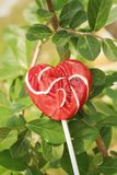 Candy valentines hearts on a green tree. Stock Image
