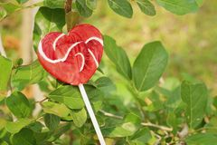 Candy valentines hearts on a green tree. Royalty Free Stock Photos