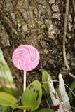 Candy valentines on a tree in the garden. Royalty Free Stock Photos