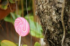 Candy valentines on a tree in the garden. Stock Photography