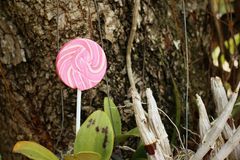 Candy valentines on a tree in the garden. Stock Photo