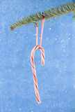 Candycane hanging from fir branch Royalty Free Stock Image