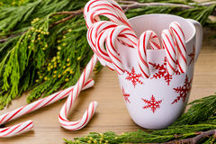 Candycanes Stock Images