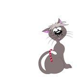 Candycat 免版税图库摄影