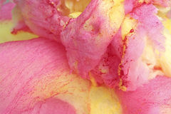 candyfloss Royalty-vrije Stock Fotografie