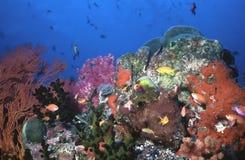 Candyland subaquático Imagens de Stock