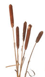 Cane. The group of canes costs vertically Royalty Free Stock Photos