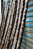 Cane Royalty Free Stock Photo